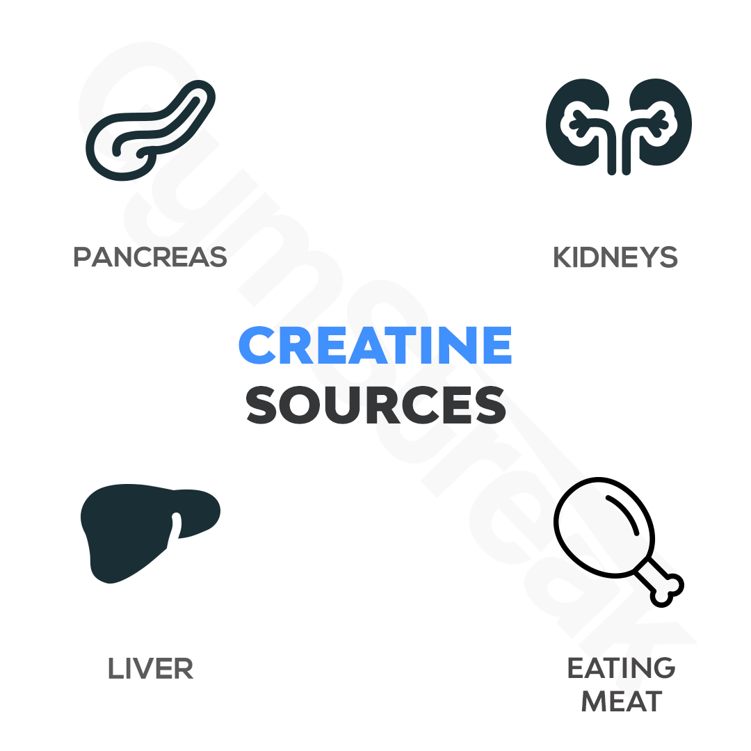 Diagram Showing Sources of Creatine in and outside the body